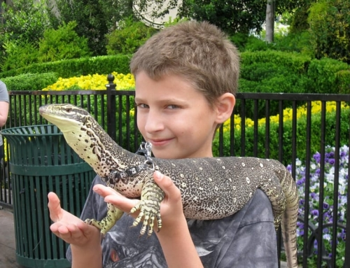 Boy with lizard